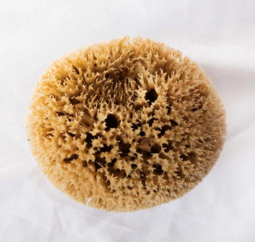 Esponja baño adulto - Honey Comb